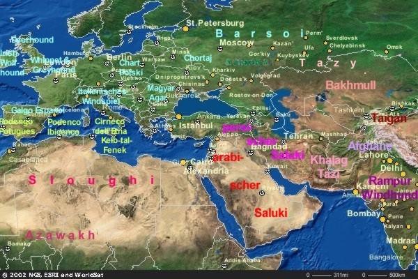 Windhundverbreitungskarte.jpg